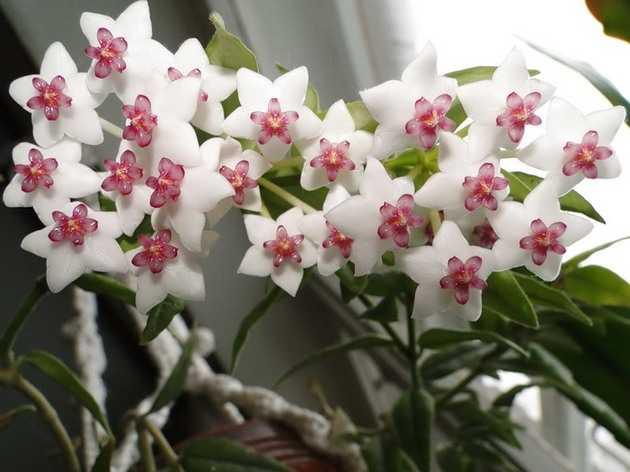 Комнатные растения, которые приносят в дом семейное счастье и любовь