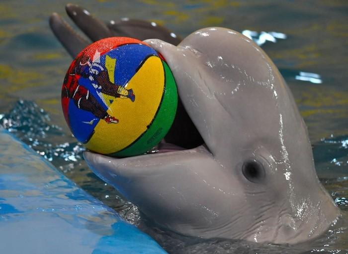 Действительно ли дельфины так умны, как о них говорят?