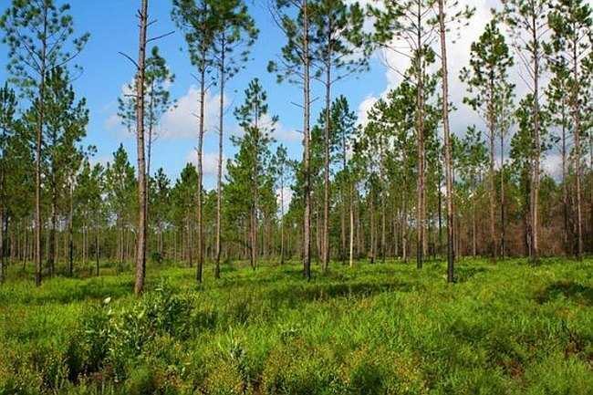 Зачем бывшему картежнику тысячи гектар земли?