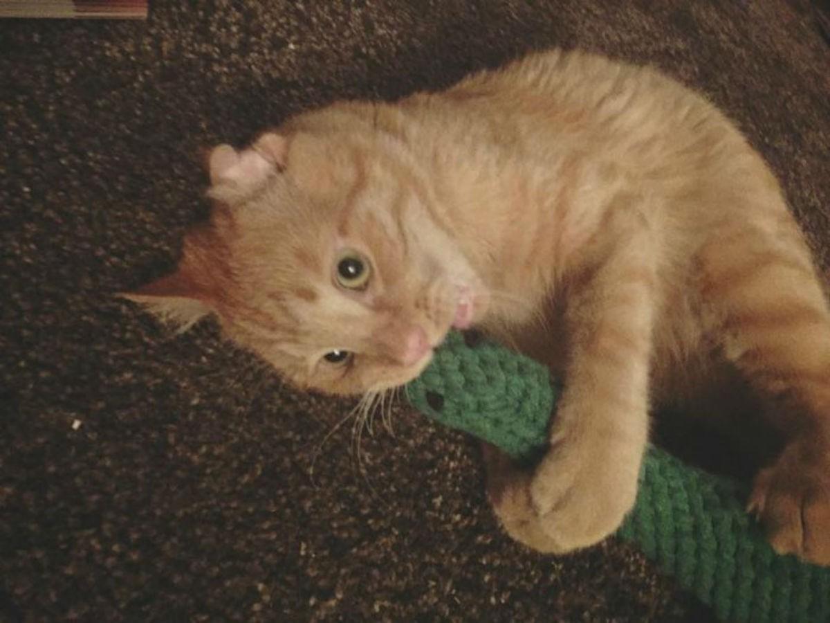 Это БенБен, самый грустный кот в интернете. Пара взяла кота, и вот, как он изменился всего за час