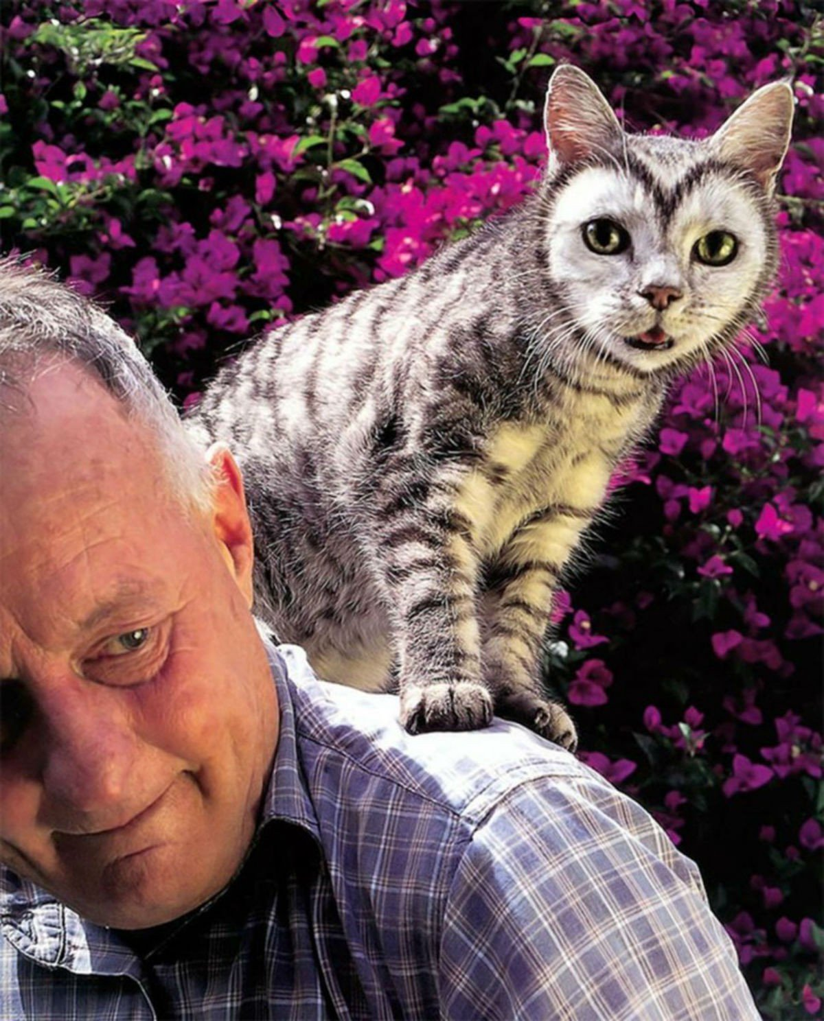 смоленской картинки самых необычных кошек вопроса