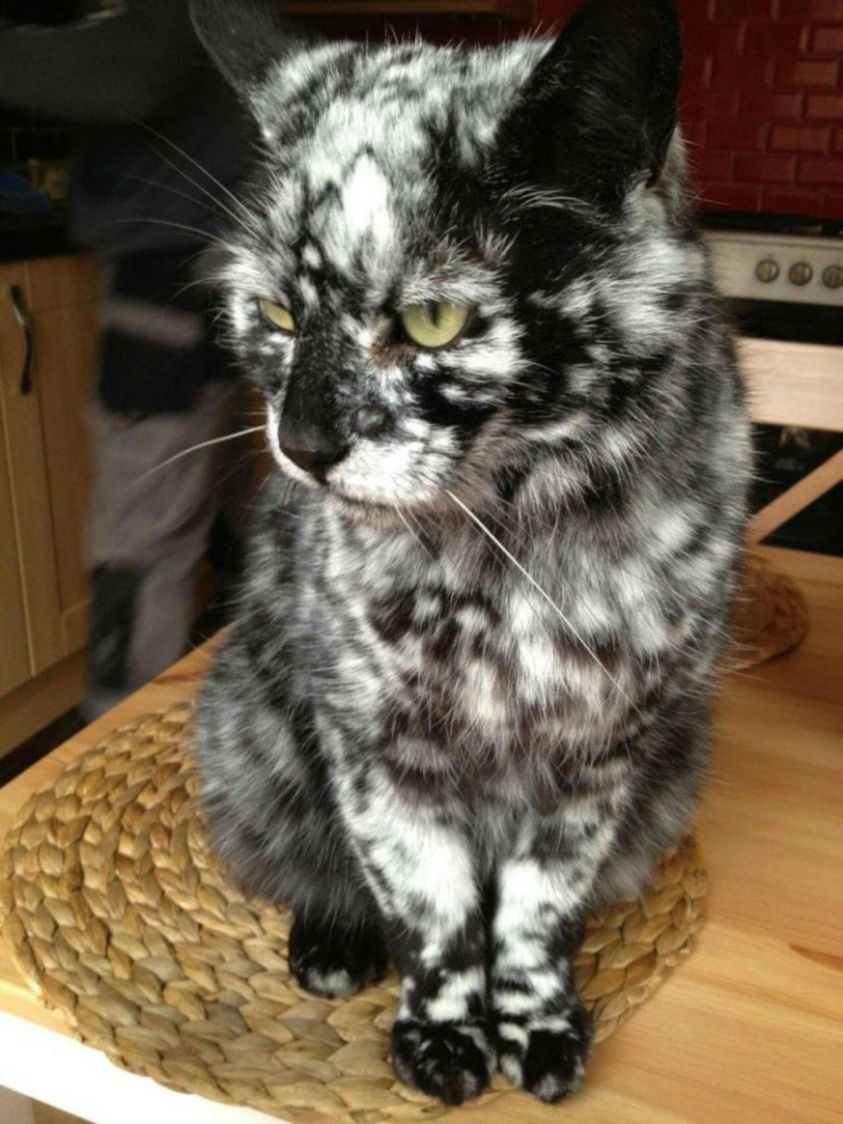 18 замечательных кошек с необычным oкpacом