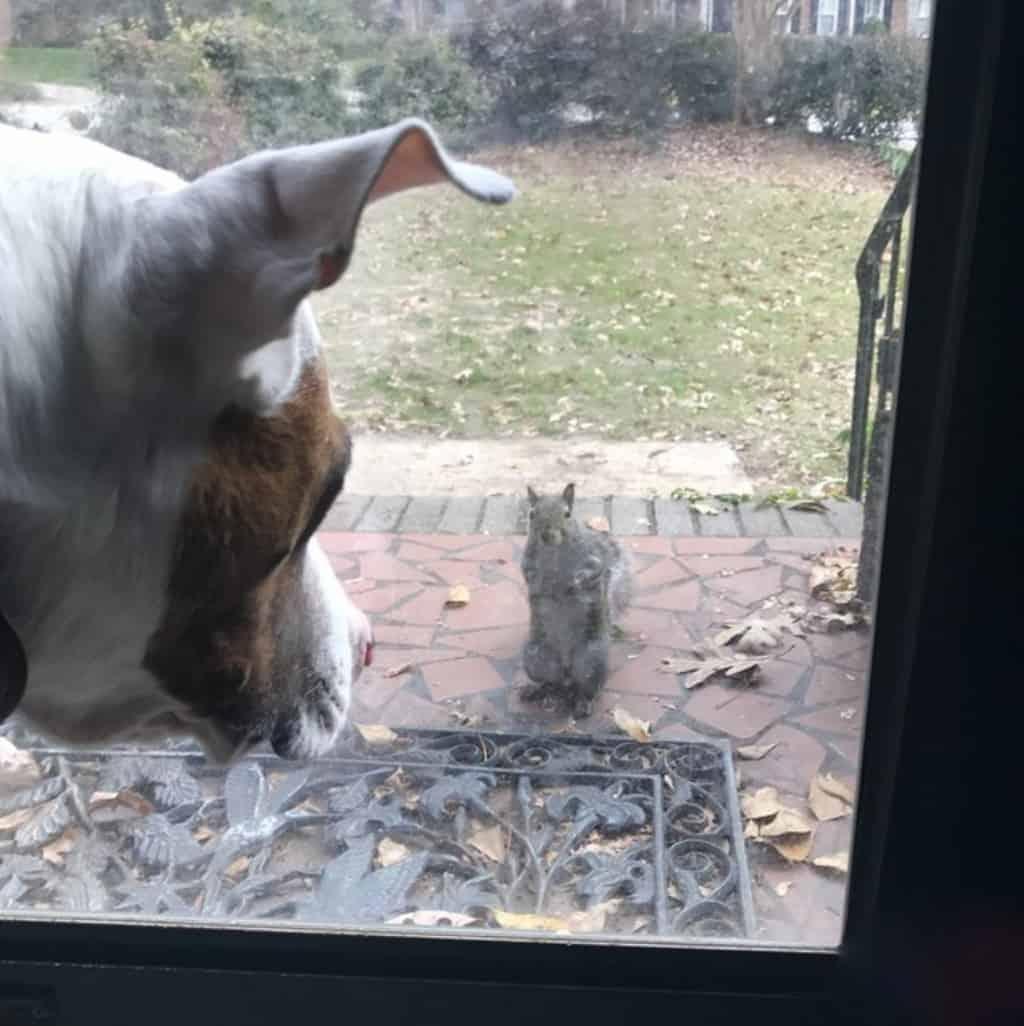 Эта очаровательная белка 8 лет прибегает к окнам одной семьи. И вот почему