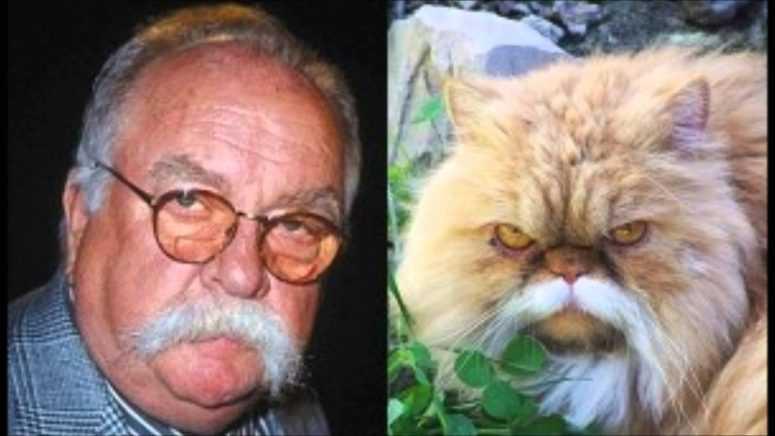 Животные — двойники знаменитостей, потрясающие случаи сходства