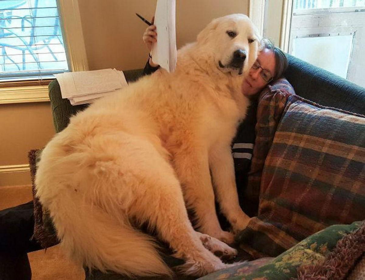 Собаки которые не понимают на сколько они большие