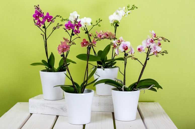 Как из одной орхидеи вырастить 100