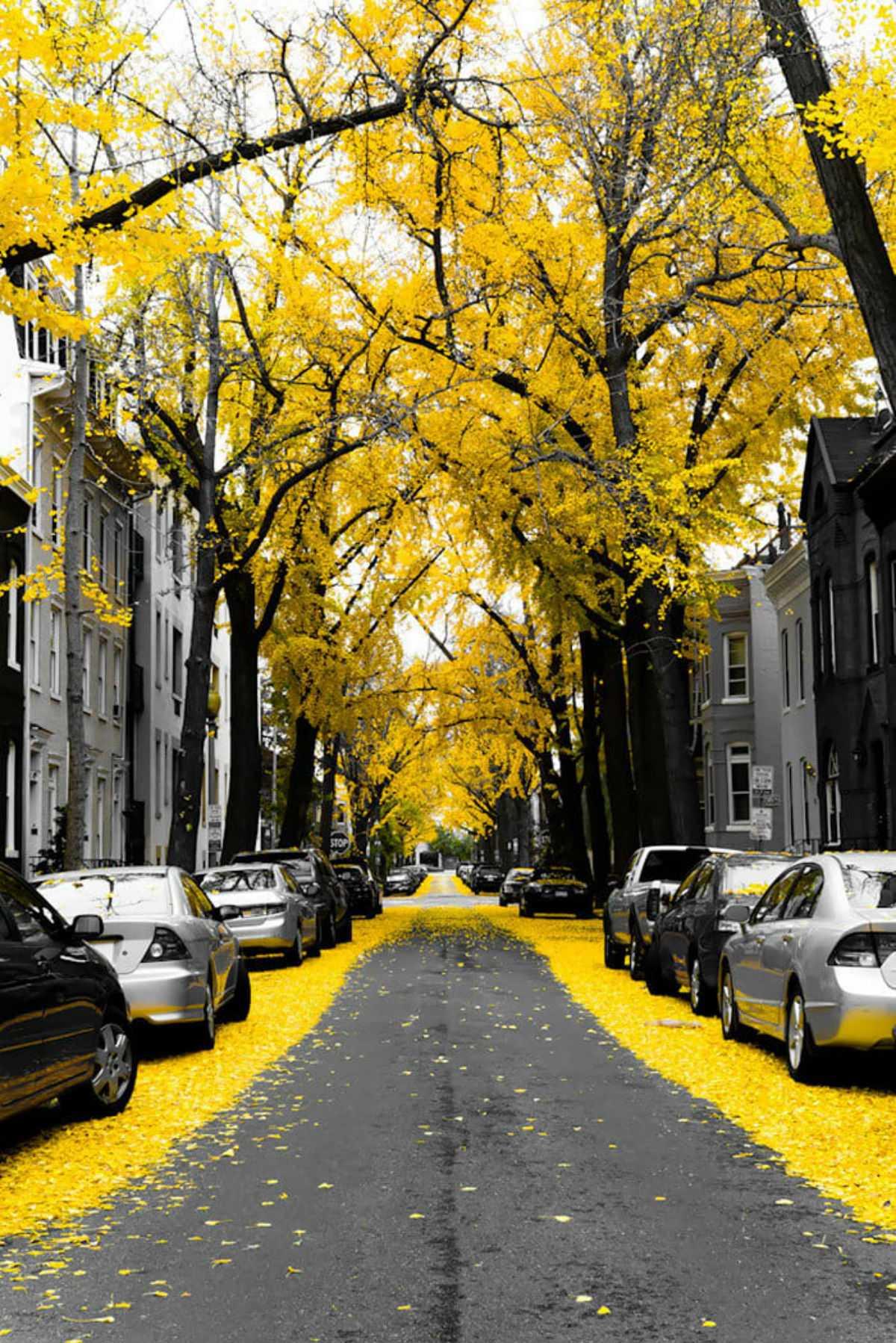 Красивые улицы мира