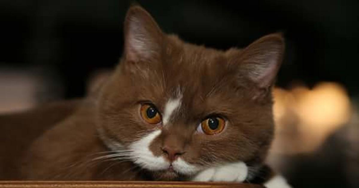 Какие признаки того, что кошка оповещает хозяина о негативе в доме