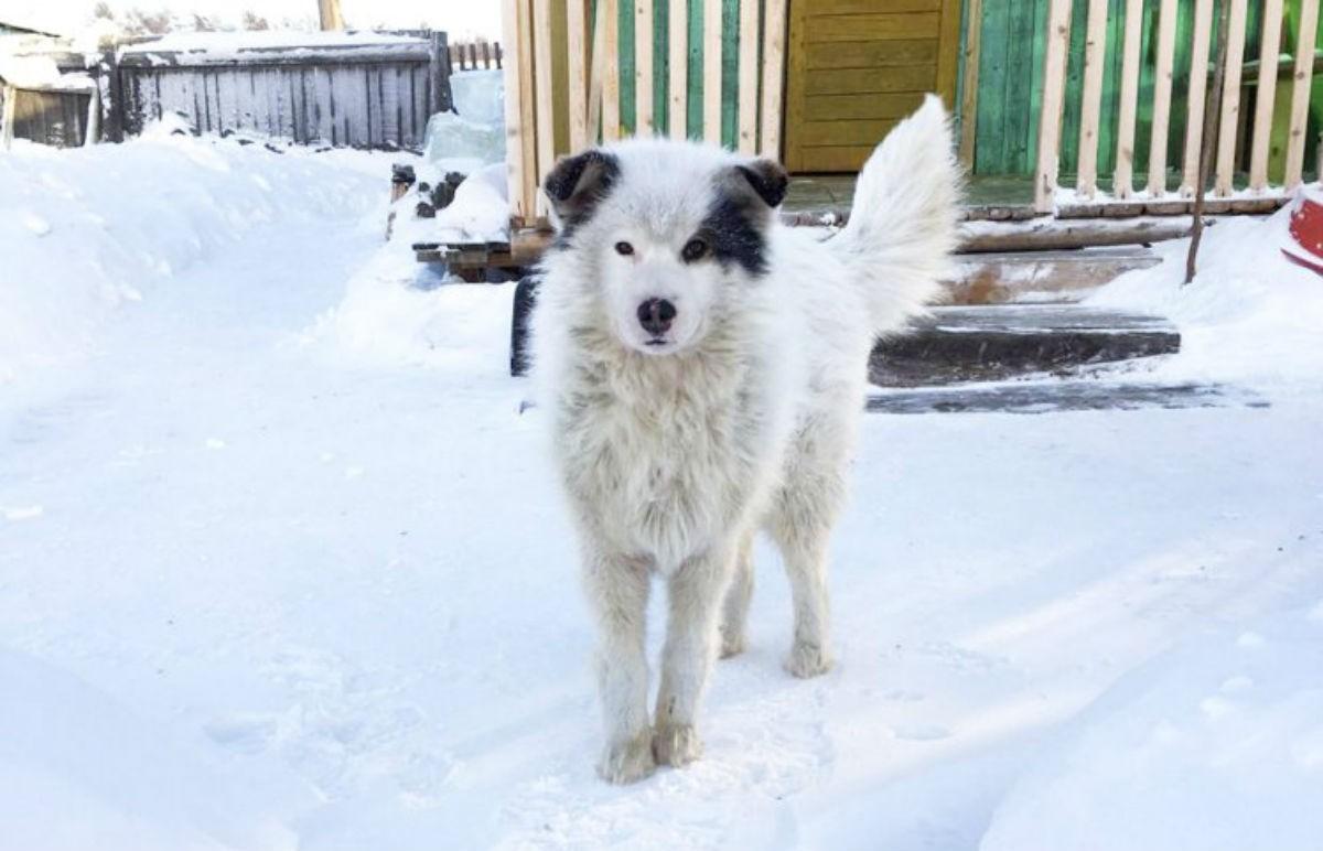 Люди пытались помочь замёрзшей собаке. Вскоре они с ужасом обнаружили, что собака что-то прячет под собой