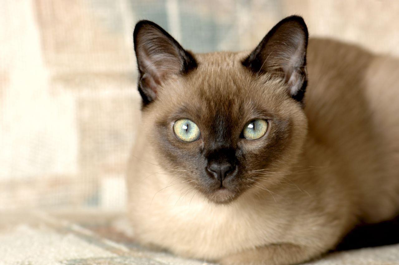 Выбор уникален! Какую кошку стоит завести в этом году разным знакам Зодиака