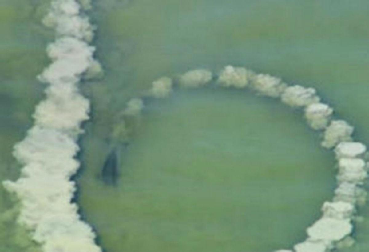 Дельфин делает круг из песка и замирает, а через секунды на камеру попадает невероятное зрелище