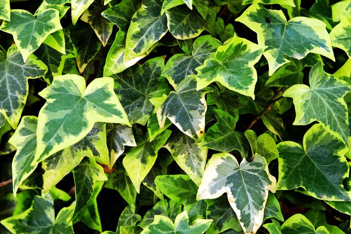 Растения – кислородные бомбы! Хотя бы один должен быть в вашем доме