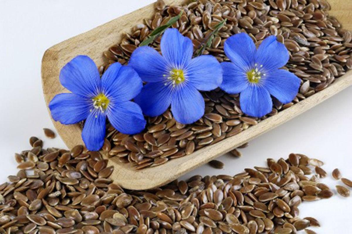 Целебные свойства льна и рецепты для похудения