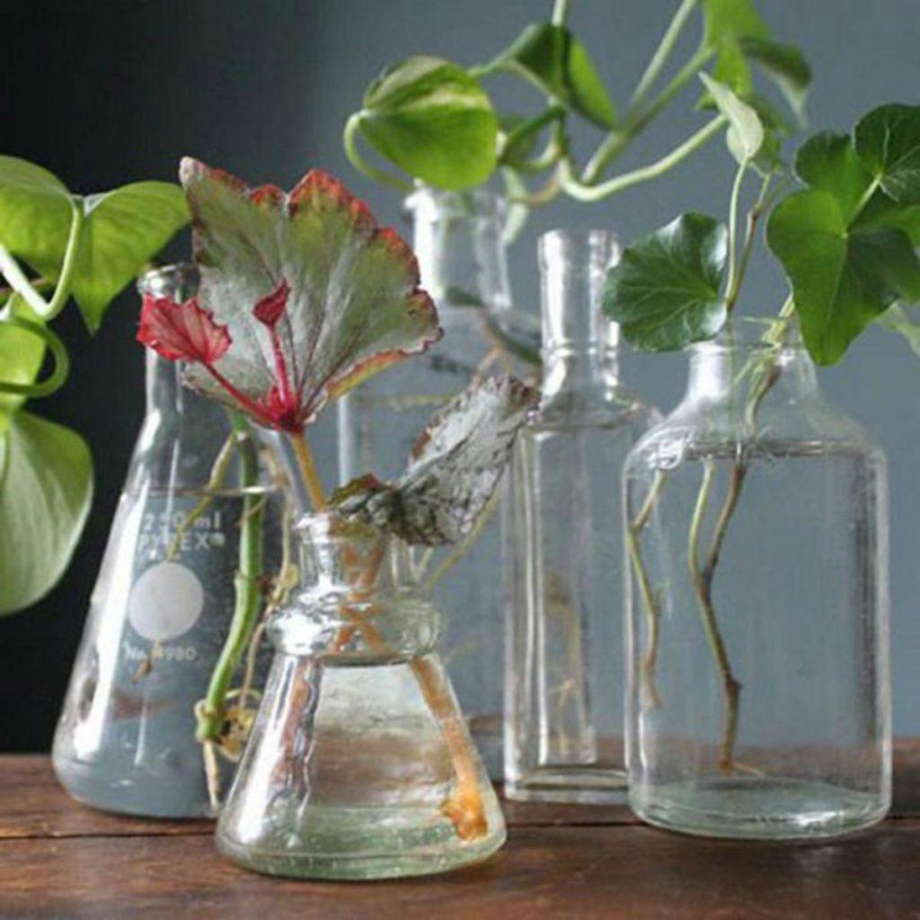 раствор янтарной кислоты для замачивания семян