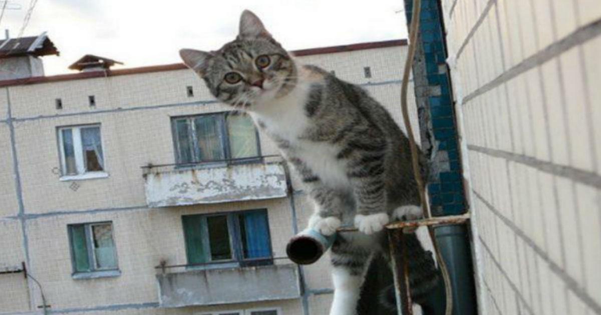 Только кот знает как нужно утешить женщину