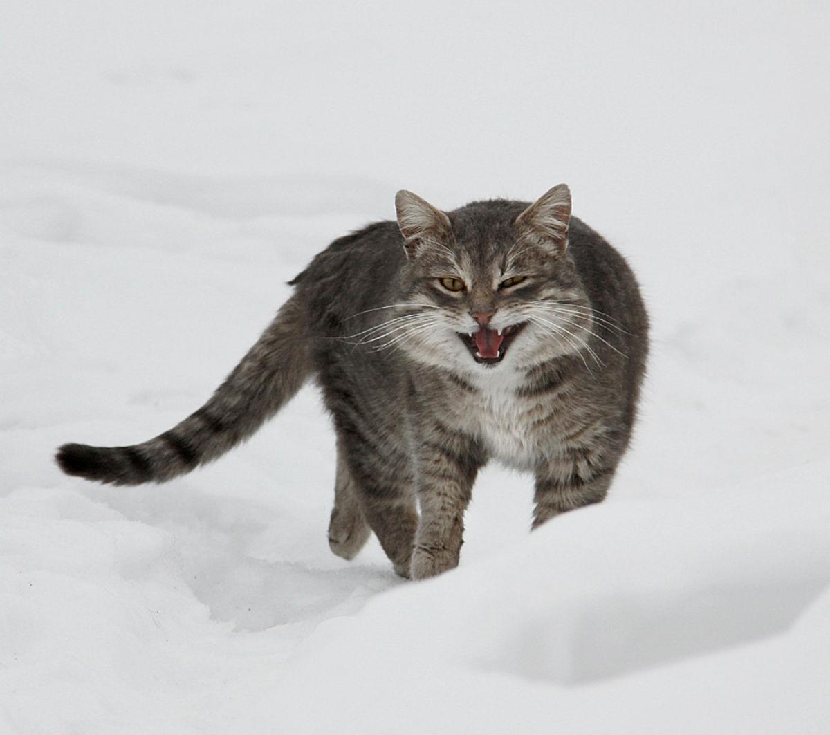 Про кота разбойника. (На работе читать не рекомендуется, день будет сорван)