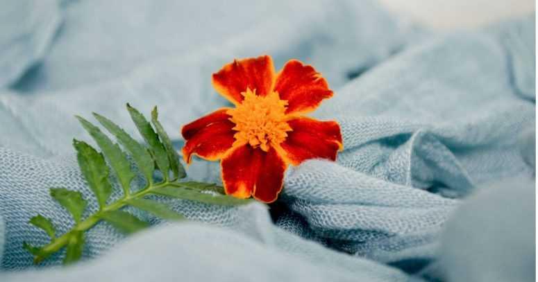 А какой цветок нравится вам? Узнай что-то новое о своих чувствах!