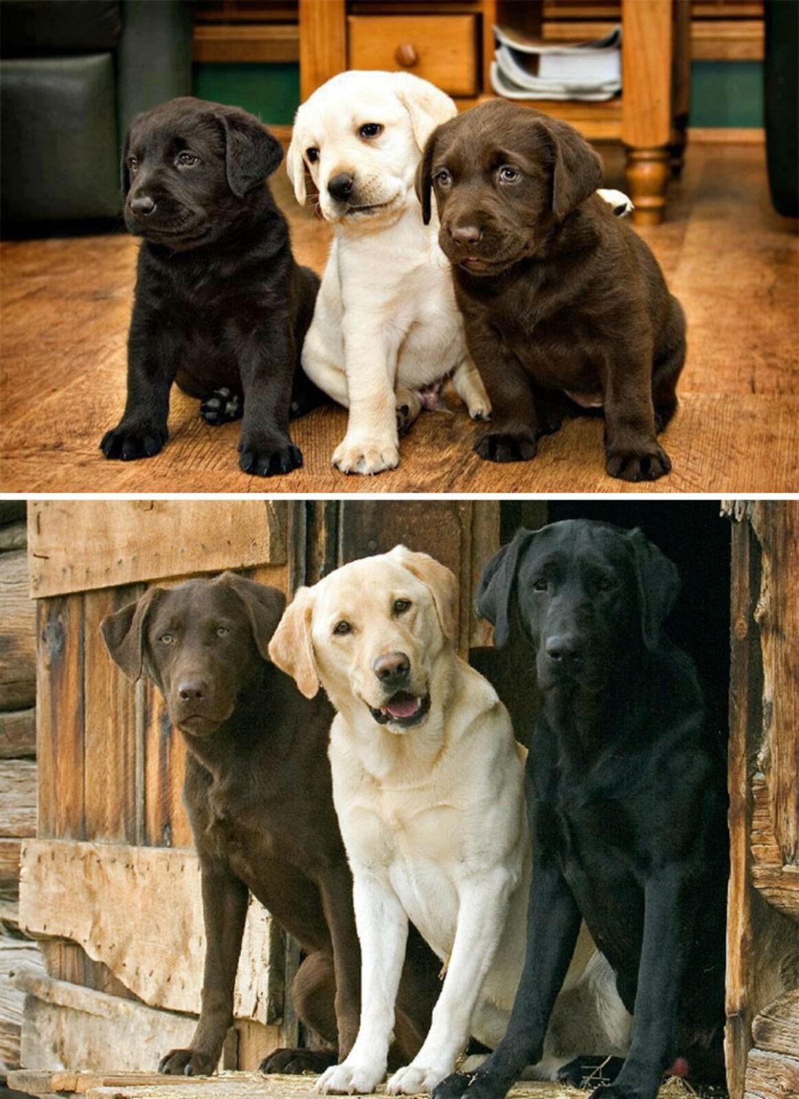 «Тогда и Сейчас» фото животных, которые выросли вместе