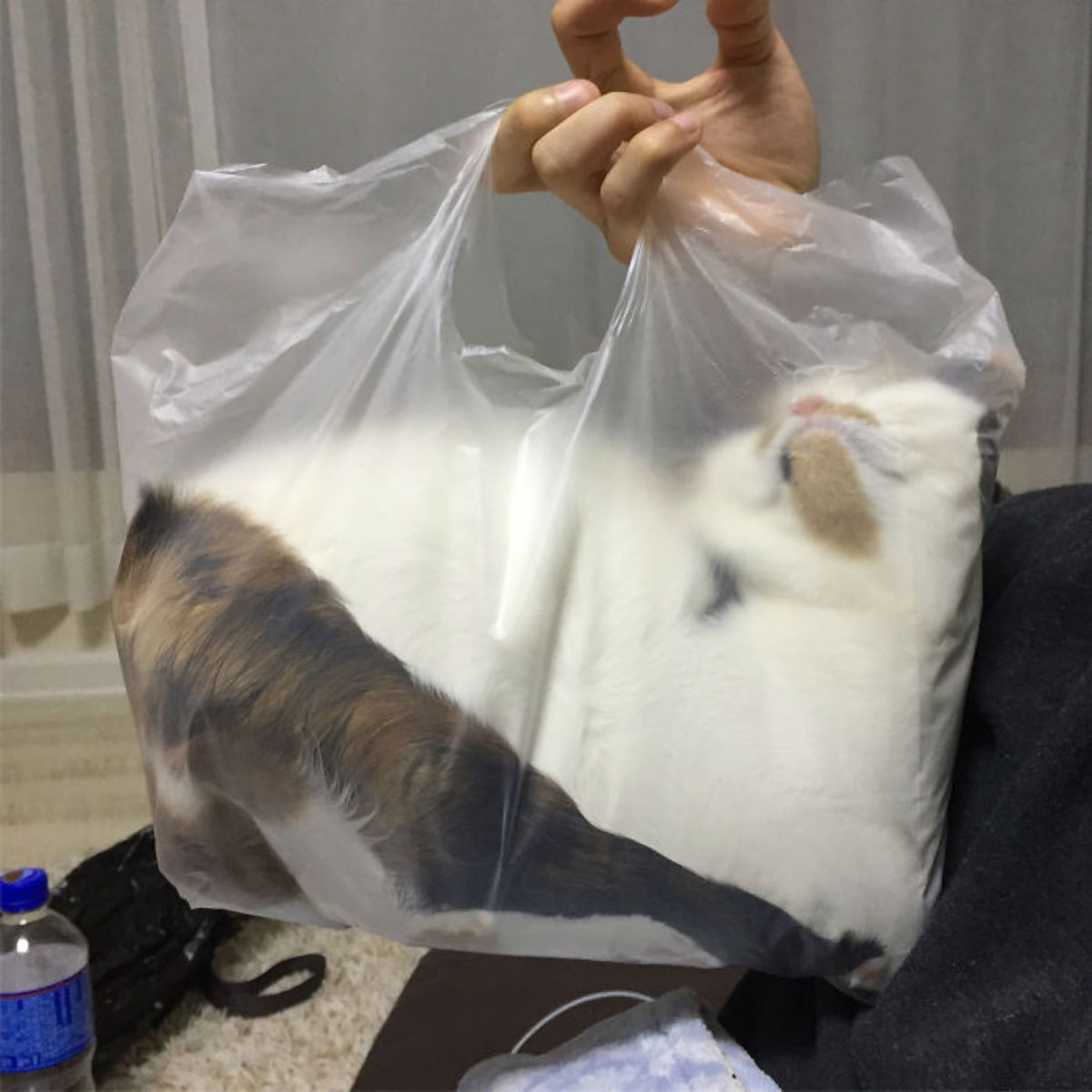 Яркие  доказательства того, что коты — это жидкость