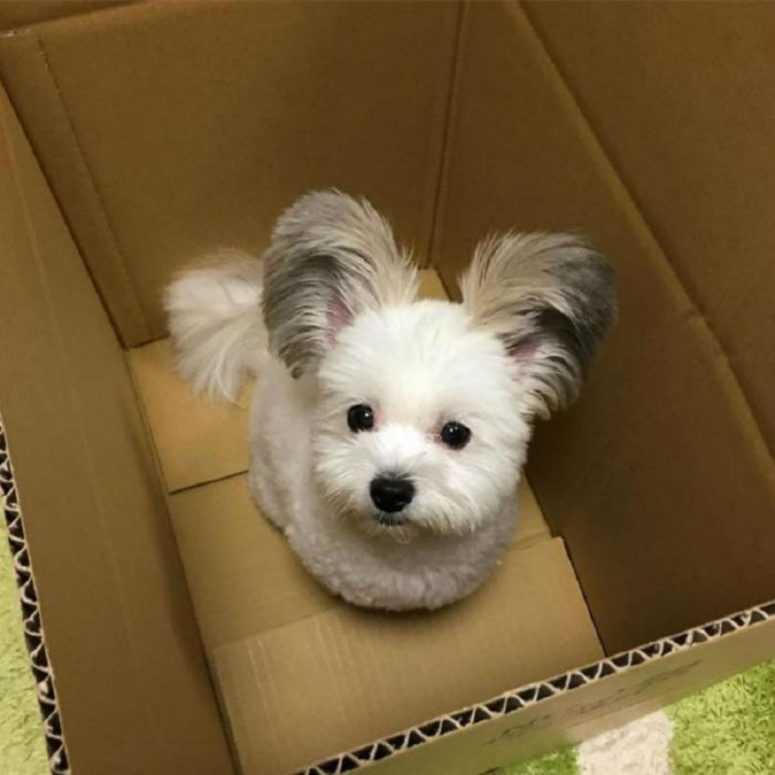 Все в восторге от этой очаровательной собачки с ушами Микки-Мауса