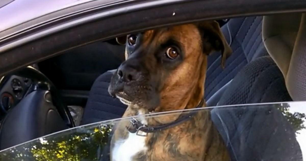 Парни представились полицейскими и подошли к собаке в машине. Умора просто!