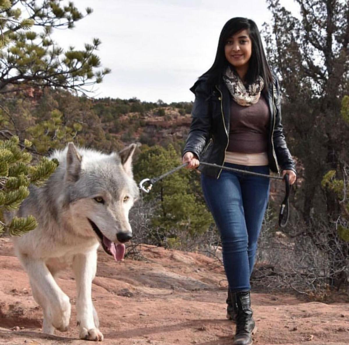 Волкособы: чудесные питомцы для тех, кому мало обычных собак