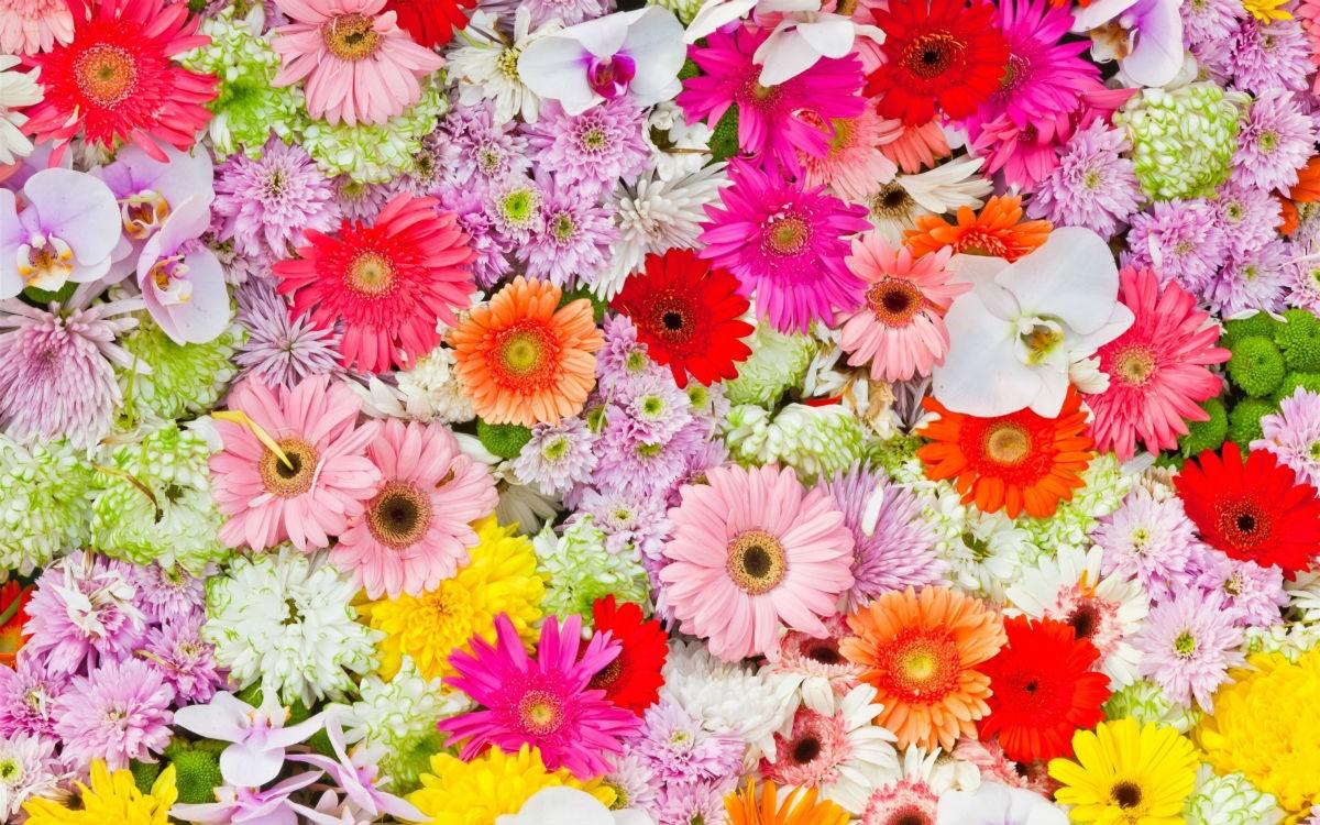Смотрите какие восхитительные цветы! Выберите один, узнайте много интересного о себе!