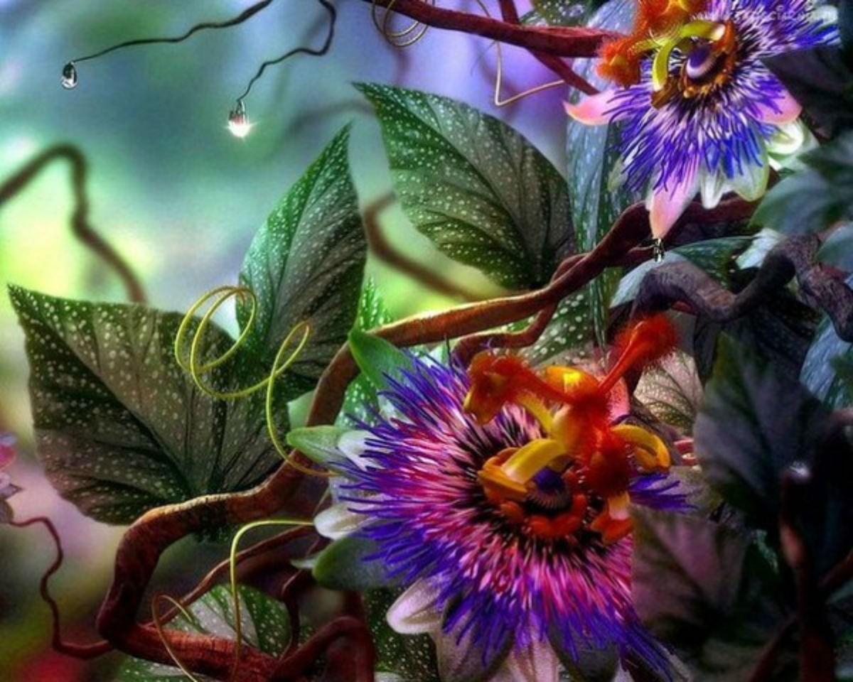 Комнатный цветок от сглаза и порчи фото
