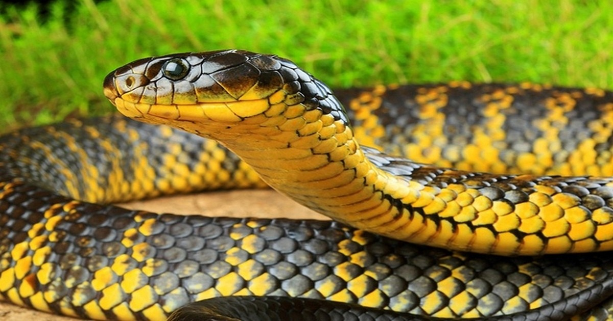 Притча про человека и змею