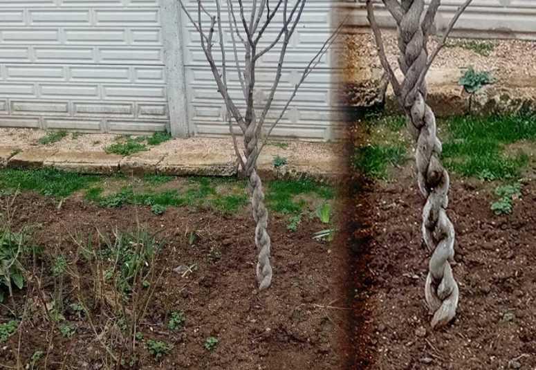 Как заплести дерево в косичу, а главное - зачем