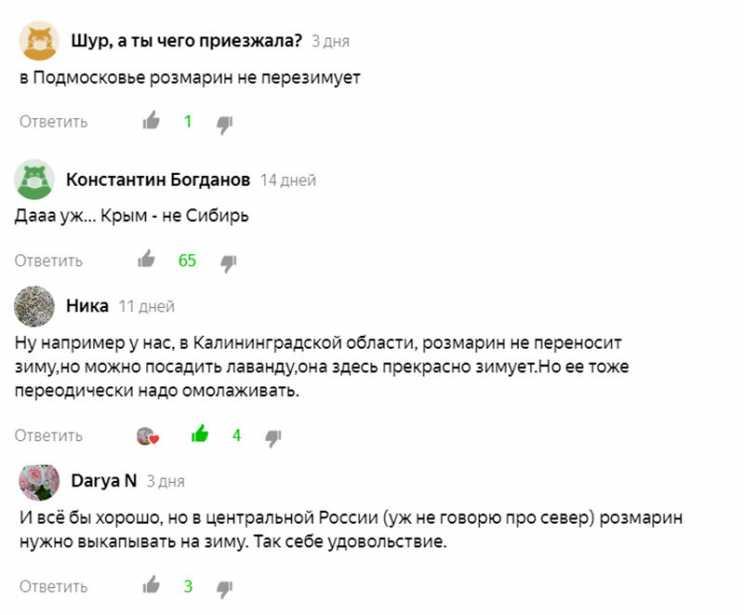 Подмосковье, Калининград, Сибирь, Центральная Россия - читатели из этих регионов говорят, что розмарин у них не перезимует.